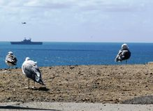 Seagulls watching the ocean. Seagulls looking out over the ocean towards a armed forces ship Royalty Free Stock Images