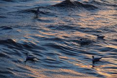 Seagulls on water Stock Photography