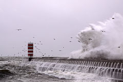 Seagulls wave Stock Photography