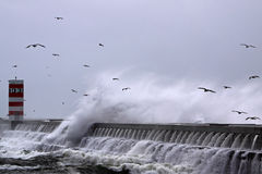 Seagulls wave Royalty Free Stock Photography