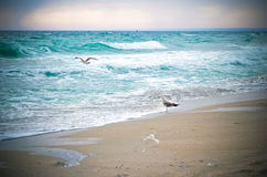 Seagulls and waves Royalty Free Stock Photo