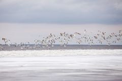 Seagulls in winter Royalty Free Stock Photos