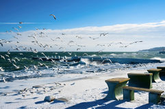 Seagulls at winter sea Stock Images