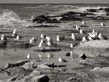 Seagulls by the sea. Stock Image