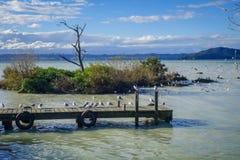 Seagulls on wooden pier, Rotorua lake , New Zealand. Seagulls on wooden pier landscape, Rotorua lake , New Zealand Royalty Free Stock Photo