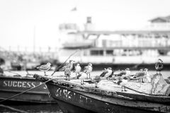 Seagulls zbierający na łodziach rybackich fotografia stock