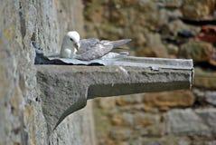 Seagullsammanträde Fotografering för Bildbyråer