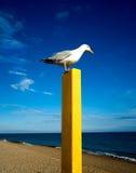 Seagullsammanträde på den gula stolpen på stranden Arkivbilder