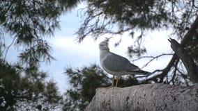 Seagullsammanträde på ett träd arkivfilmer