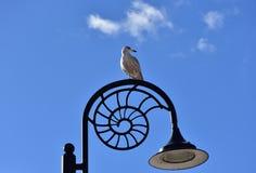 Seagullsammanträde på lyktstolpen i Lyme Regis, Dorset Arkivbilder