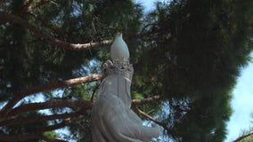 Seagullsammanträde på statyhuvudet lager videofilmer