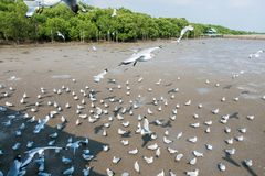 Seagullsfågel på havet Bangpu Samutprakarn Thailand Royaltyfri Bild