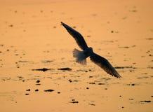 seagullsilhouette Fotografering för Bildbyråer