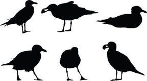 seagullsilhouettes Arkivbild