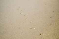 Seagullslinga i sanden Arkivfoton