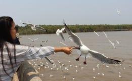 Seagullsmatning Royaltyfri Foto