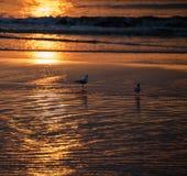 Seagullsmatställe Fotografering för Bildbyråer