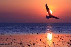 seagullsolnedgång Arkivbilder