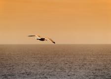 seagullsolnedgång Arkivfoton