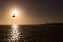 Seagullsolnedgångstrand arkivfoto