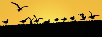 Seagullssilhoettes på taket på gul soluppgång Royaltyfri Bild