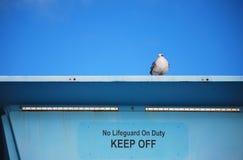 Seagullställningsvakt på livräddaretorn arkivfoton