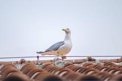 Seagullståenden parkerar in 5 Arkivfoto