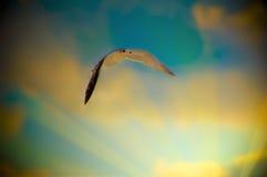 seagullsunrays Royaltyfria Bilder