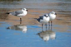 seagullswatch royaltyfri foto