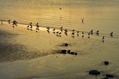 Seaguls στην παραλία τη νύχτα Στοκ φωτογραφίες με δικαίωμα ελεύθερης χρήσης