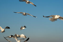 Seaguls. стоковое изображение