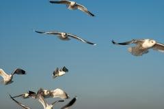 Seaguls. Stock Image