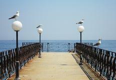 Seaguls Immagini Stock Libere da Diritti