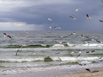 Seaguls. Flying on the beach Royalty Free Stock Photography