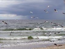 Seaguls Photographie stock libre de droits