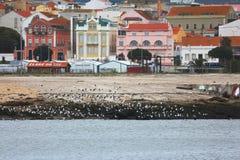 Seaguls in de Rivier stock afbeelding