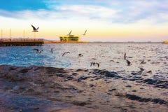 Seaguls on embankment Stock Photo
