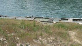 Seaguls en eenden in het overzees stock video
