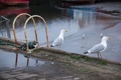 Seaguls on the harbor Stock Photos