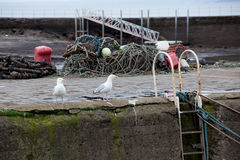 Seaguls on the harbor Stock Images