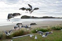 Seaguls na plaży Fotografia Royalty Free