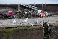 Seaguls na schronieniu Obrazy Stock