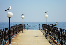 Seaguls Royalty Free Stock Images