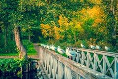 Seaguls on a small bridge Royalty Free Stock Photo