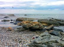 Seascape with seaguls and stones. Seaguls and stones on a sea shore Stock Photography