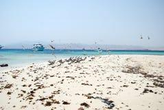 Seaguls sur la plage égyptienne Image libre de droits