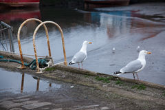 Seaguls sur le port Photos stock