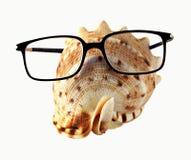 Seahell in den Brillen Stockfotos