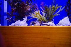 seahorse photographie stock libre de droits