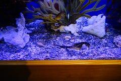 seahorse photos libres de droits